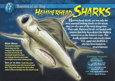Slightly, the trading card title is different from the knowledge card title. Shark In The Ocean, Types Of Sharks, Underwater Creatures, Wild Creatures, Animal Species, Marine Biology, Animal Facts, Shark Week, Inspiration For Kids