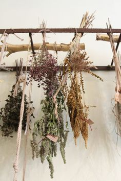 Herb drying <3