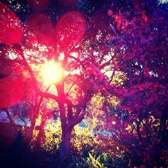 Autumnal view from my garden.