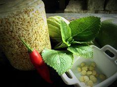 Guia para Germinação de Sementes Comestíveis