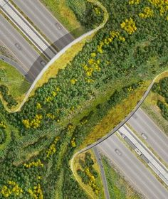 ARC: International Wildlife Crossing Infrastructure Design Competition Finalists: The Olin Studio with Explorations Architecture (Paris), Buro Haphold (London), and Applied Ecological Services