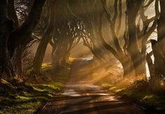 A Path Purposefully Chosen