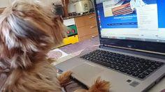 Mi Toby ayudandomea crear ideas para mi blog @creanegociosinternet.com