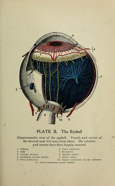 The Eyeball. 'The practical guide to health : a popular treatise on anatomy, physiology, and hygiene, with a scientific description of diseases, their causes and treatment; designed for nurses and for home use'. By Rossiter, Frederick M. (Frederick Magee), b. 1870. Published 1913 (https://pinterest.com/pin/287386019948302068). See: https://pinterest.com/pin/287386019943307272