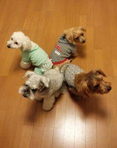 Coco, Michelle, San-chan, Roger