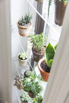 Diy window shelves window plants, indoor window planter, indoor h Window Plants, Hanging Plants, Plants Indoor, Indoor Window Garden, Plant Window Shelf, Diy Hanging, Indoor Herbs, Window Wall, Outdoor Plants