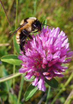 Wasa Bee.