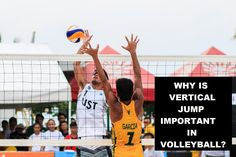 There are many skills needed to be a good volleyball player. Is the vertical jump an important skill needed in volleyball? Volleyball Net, Volleyball Players, Plyometric Workout, Plyometrics, What Is Great, Weight Lifting Workouts, Calf Raises, Hip Thrust, High Jump