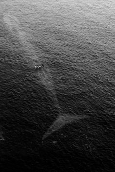 Sea Life ~ Blue Whale swimming just below the surface of a small boat Beautiful Creatures, Animals Beautiful, Cool Pictures, Cool Photos, Beautiful Pictures, Photo Animaliere, Tier Fotos, Jolie Photo, Ocean Life