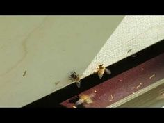 Honey Bees, Youtube, Bees, Youtubers, Youtube Movies