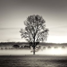 Who knew a tree has it all figured out? Be the tree, woman. Colors Of The World, Black And White Tree, Black And White Landscape, Decision Tree, Tree Forest, Tree Tree, Color Of Life, Black And White Photography, Mists