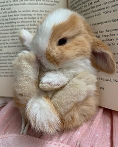 The Dutch dwarf rabbit is currently the smallest pet rabbit. It originated from a small Dutch rabbit in the century. After breeding and breeding in the United Kingdom and the United States… Baby Animals Super Cute, Cute Baby Bunnies, Cute Little Animals, Cute Funny Animals, Cute Cats, Baby Animals Pictures, Cute Animal Photos, Fluffy Animals, Animals And Pets