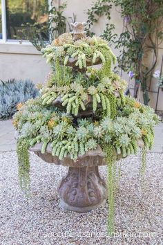 Fountain+of+Succulents+in+Jeanne+Meadow's+Garden+-+www.succulentsandsunshine.com