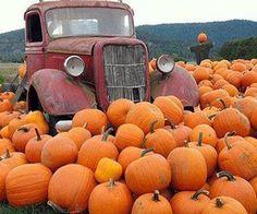 Vintage Truck in the Pumpkin Patch vintage autumn fall old truck antique pumpkin halloween patch Pumpkin Patch Pictures, It's The Great Pumpkin, Pumpkin Farm, Pumpkin Field, Pumpkin Spice, Fall Pictures, Fall Pics, Amazing Pictures, Fall Photos