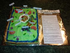 Edible plant cell. 5th grade project