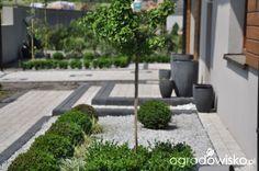 Lawendowy zawrót głowy - strona 616 - Forum ogrodnicze - Ogrodowisko