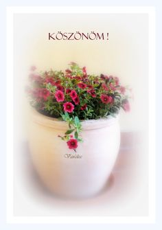 Köszönöm Happy Day, Emoji, Good Morning, Planter Pots, Thankful, Birthday, Christmas, Cards, Bom Dia
