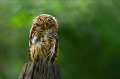 Owl......Cute