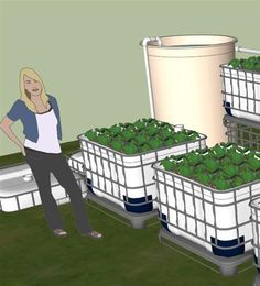 Building and Running an Aquaponics System