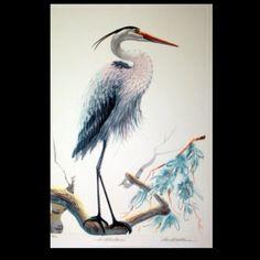 blue heron tattoos - Bing Images