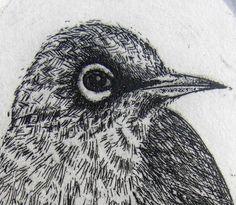 Original Etching, New Zealand bird engraving