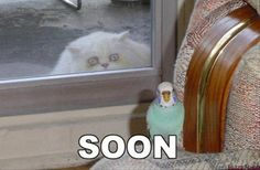 """Soon"" :) #funny #animals"