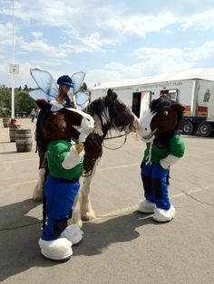 Twitter / Recent images by @DRAFTHORSETOWN - Tug and Tess at the 2012 Calgary Stampede!