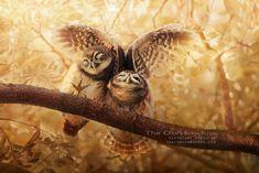 Снимки этого фотографа похожи на иллюстрации к сказкам... Потрясающие кадры с неотразимыми совами!
