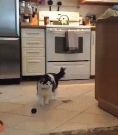 Cat Entertains Itself