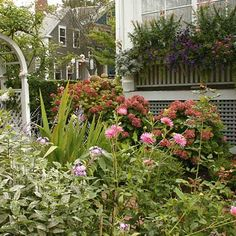 A classic rose-covered arbor and meticulously trimmed privet hedge provide architectural structure in a small yard overflowing with pink and purple flowering plants, including lush hydrangeas, old-fashioned garden phlox (foreground), and a wide window box filled with sun-loving annuals. Photo: Nancy Andrews | thisoldhouse.com | from Cottage Gardens