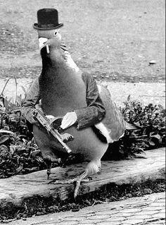 Pigeon gangsta