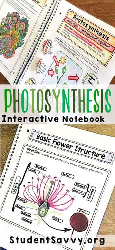 Photosynthesis Process for Kids Simplified for Easy Understanding