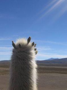 Cactus, Desierto de Atacama, Chile