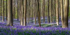 Forest in Belgium with an amazing history