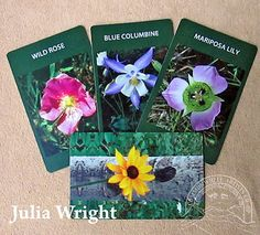 Wildflower cards by Julia Wright Mariposa Lily, Wild Flowers, Colorado, Rose, Artist, Cards, Blog, Gifts, Artists