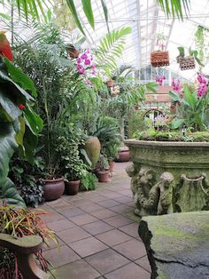 Conservatory of Flowers San Francisco.  Can't get enough