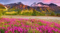 Pink Flower Field Wallpaper Phone for HD Wallpaper Desktop 1920x1080 px 681.62 KB