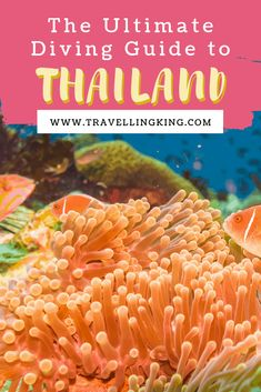 The Ultimate Diving Guide to Thailand Phuket Travel, Thailand Travel Guide, Bangkok Travel, Visit Thailand, Asia Travel, Travel Plan, Budget Travel, Group Travel, Family Travel