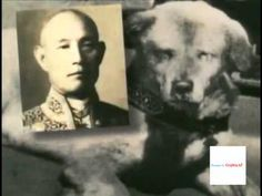 The Most Effective Dog Obedience Training - Dog-Care Akita Dog, Akita Puppies, Service Dog Training, Service Dogs, Training Tips, Hachiko Dog, Hachi A Dogs Tale, Japanese Akita, Loyal Dogs