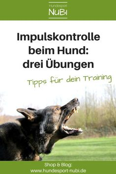 3 Übungen zur Impulskontrolle – wie dein Hund lernt, nicht auszuflippen Impulse control in dogs is important. No matter whether sport dog or family dog. That's why we show you our three favorite exercises that have proven their worth in training. Pet Dogs, Dogs And Puppies, Pets, Dog Test, Protective Dogs, Impulse Control, Learning To Relax, Dog School, Young Animal