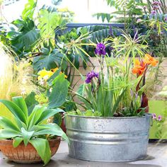 Easy DIY Solar Fountain in 1 Hour! {with Pond Water Plants} An old galvanized tub transformed into a beautiful outdoor solar fountain with pond and water plants in 1 hour using a solar pump! Detailed tutorial and lots of helpful tips! Shade Plants, Water Plants, Water Garden, Garden Pots, Container Flowers, Container Plants, Container Gardening, Pot Jardin, Backyard Plants