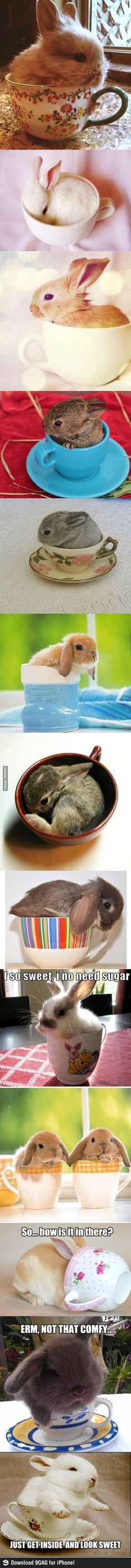 I dont like the concept that put the bunny into a tiny tea cup but they are amazingly cute in this ! awwwwwwwww