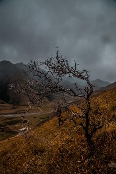 Thought the weather gave this scene a real moody atmosphere. Just outside of Queenstown NZ. [OC] [1365  2048] #reddit