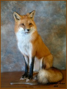 lets see some fox mounts - PredatorMasters Forums
