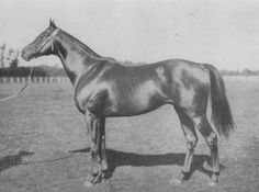 Loika(1926)(Filly)Gay Crusader- Couer A Coeur By Teddy. 3x4 To Bay Ronald, 4(C)x4(C)x5(F) To Galopin, 4(C)x4(F)x5(F) To Hampton. A Daughter Of 1917 English Triple Crown Winner Gay Crusader, She Was The Dam Of Djebel Who Appears In Never Bend(Sire Of Mill Reef) And Bold Reason(Broodmare Sire Of Sadler's Wells)Pedigrees.
