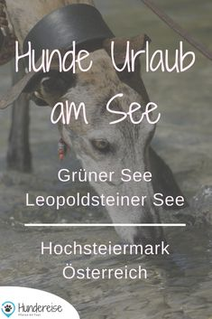 Urlaub und Wandern mit Hund in Eisenerz, Steiermark Dog holiday at lakes is especially nice. Here are 2 travel recommendations for Styria in Austria. Travel Report, Travel Music, Journey, Seen, Roadtrip, Dog Photos, Hiking, Vacation, Dogs