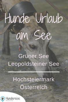 Hundeurlaub an Seen ist besonders schön. Hier 2 Reise Empfehlungen für die Steiermark in Österreich. Urlaub | Hund | Hundeblog | Hundereise | Reise | Travel | Bericht | Tipp | Österreich | Hundefoto
