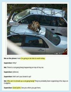 Cat Orgy: perfectly valid excuse for being late for work.