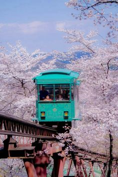 See japan