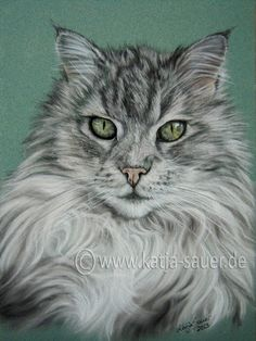 Katzenzeichnungen und Katzenportraits in Pastellkreide - Tierzeichnungen und Tierportraits von Katja Sauer / Cat paintings and cat portraits in soft pastels - Animal painting and animal portraits by Katja Sauer